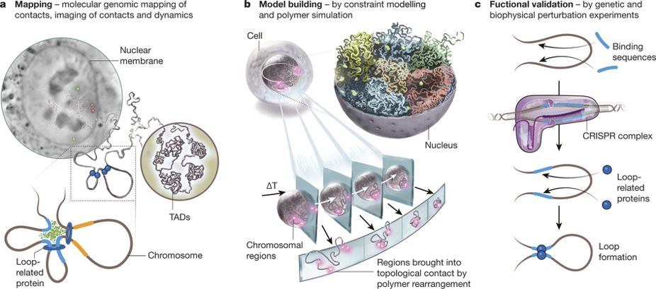 The 4D Nucleome project Nature article Figure 1
